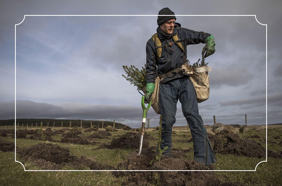 Plant a trillion trees